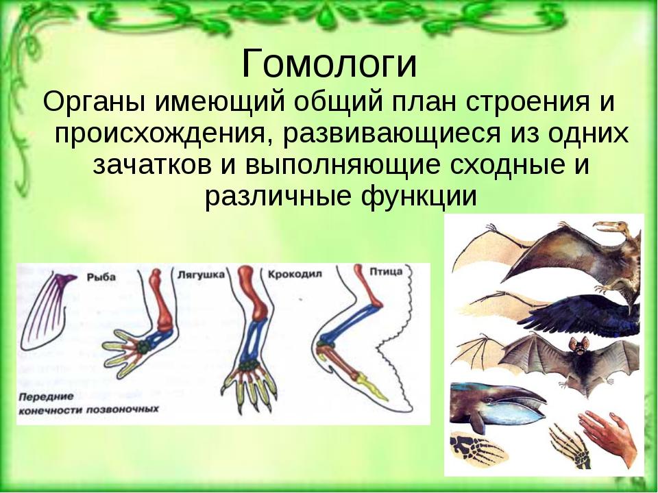 Гомология (биология) — википедия с видео // wiki 2