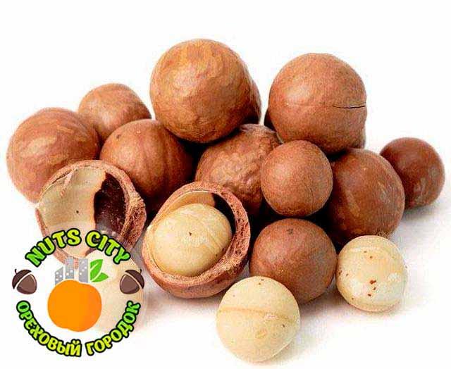 Что такое орех макадамия (австралийский орех) - полезные свойства, вред и противопоказания, отзывы и лечебные эффекты