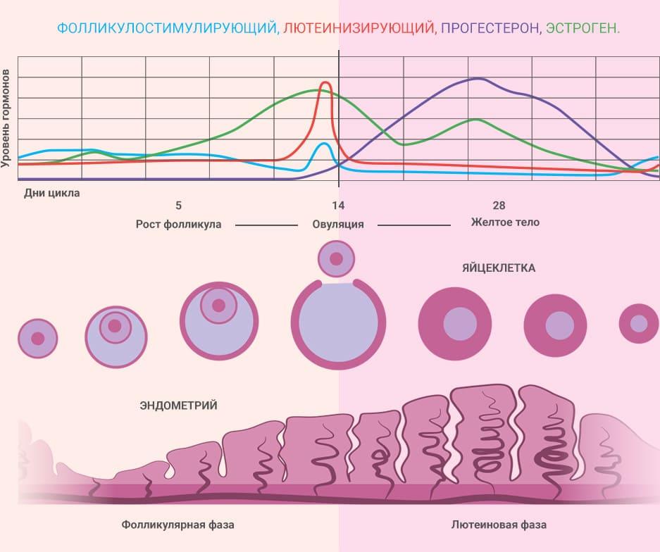 Кроткая лютеиновая фаза: что это, как влияет на беременность, методы лечения, причины, признаки