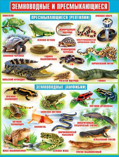 Пресмыкающиеся животные: список и особенности | vilingstore
