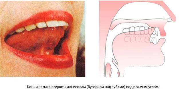Что такое альвеолы во рту. где находятся альвеолы во рту? что такое альвеолы у человека - врач-информ