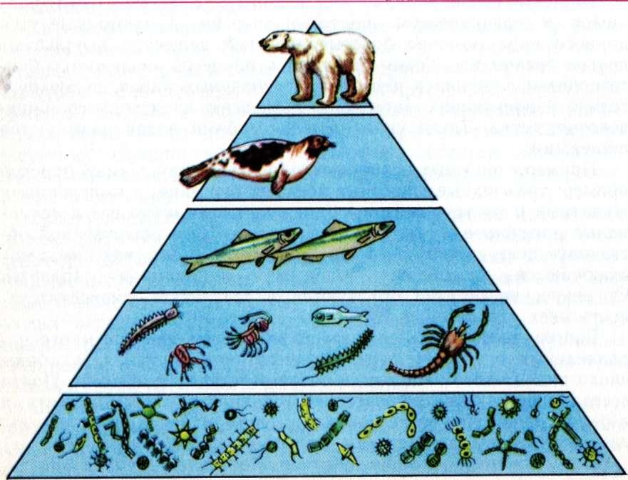 Что такое экологическая пирамида? какие различают виды пирамид? - универ soloby