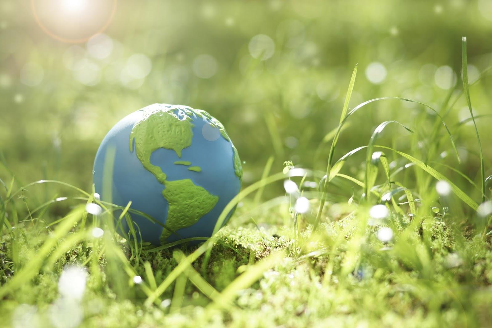Экология что такое, определение термина, кто ввел понятие экология, виды и разделы, что изучает современная глобальная экология, чем занимаются экологи   tvercult.ru