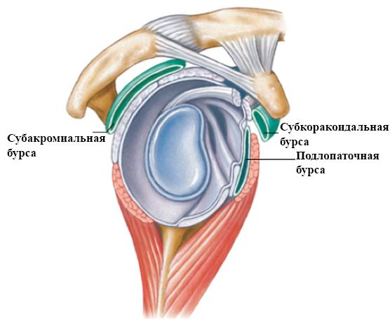 Лечение бурсита плечевого сустава (воспаление синовиальной сумки плеча)