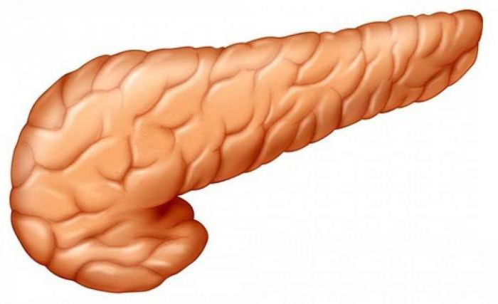 Что такое поджелудочная железа — строение, размеры и функции органа