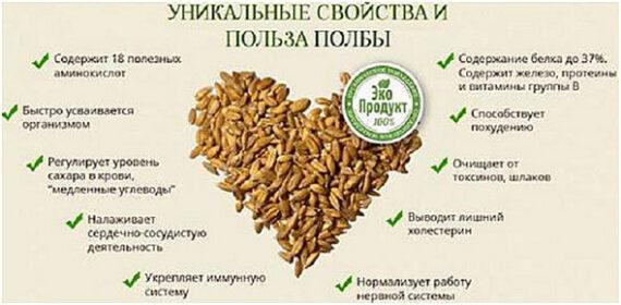 Полба - польза и вред для здоровья организма.