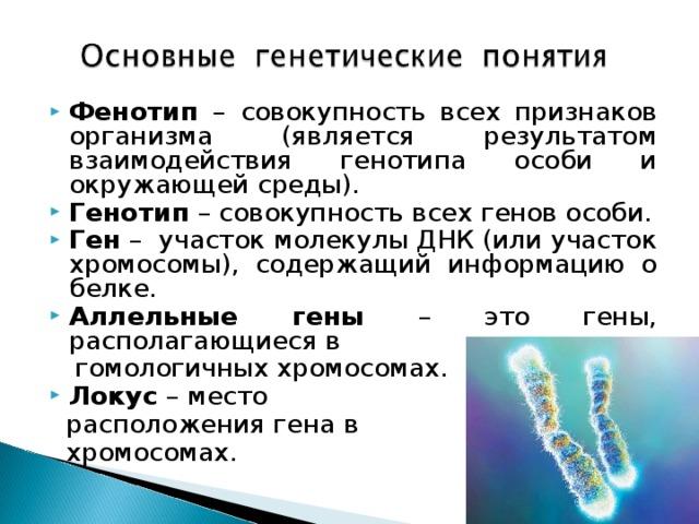 Генетика и гены