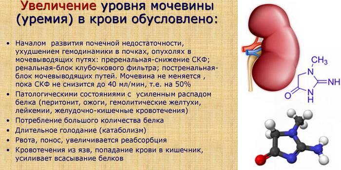 Причины понижения мочевины в крови