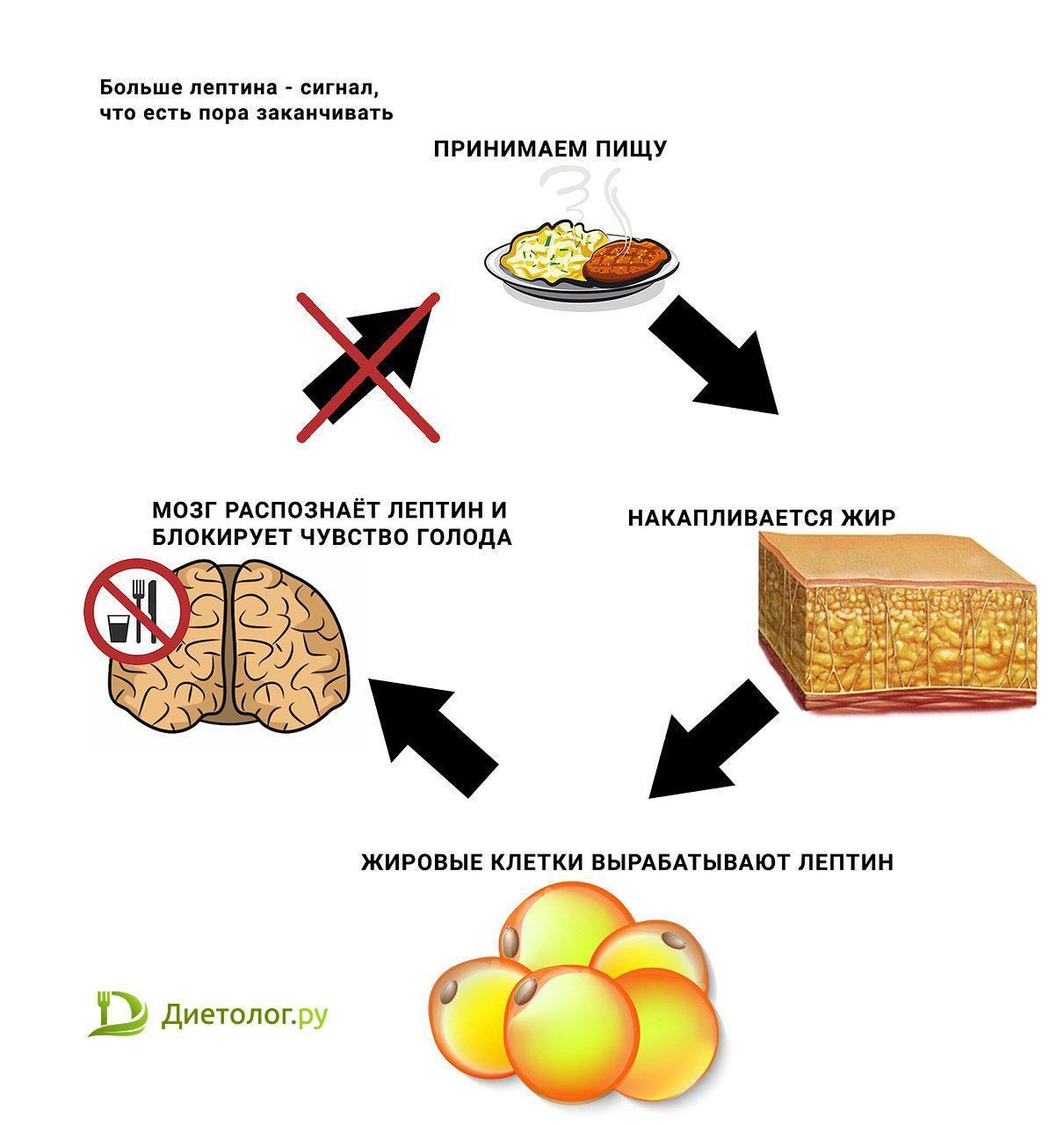 Гормон лептин — что это такое? почему высокий лептин приводит к ожирению? | фитсевен | яндекс дзен