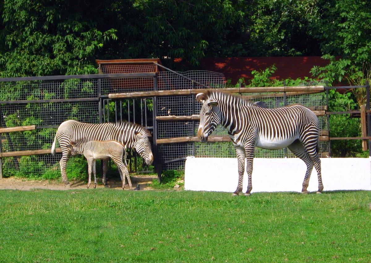 Дартмурский зоопарк — официальный сайт, режим работы и билеты 2020, где находится, как добраться |туристер.ру