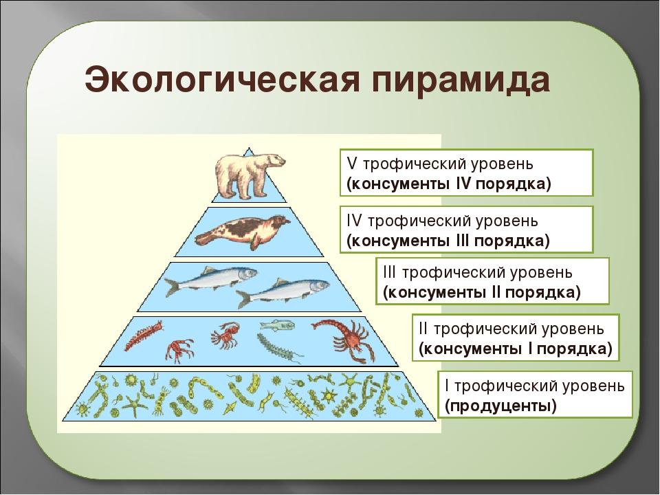 Экологическая пирамида болота. правило экологической пирамиды - все о строении человека