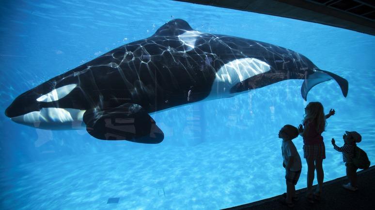 Синий кит — викиреальность