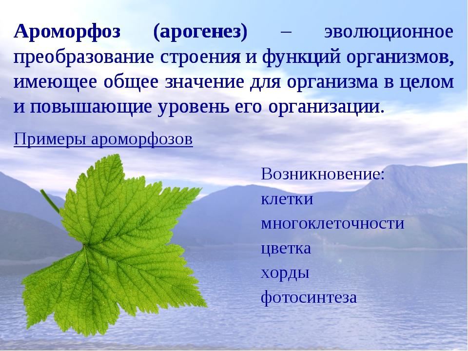 Примеры ароморфоза у растений и животных