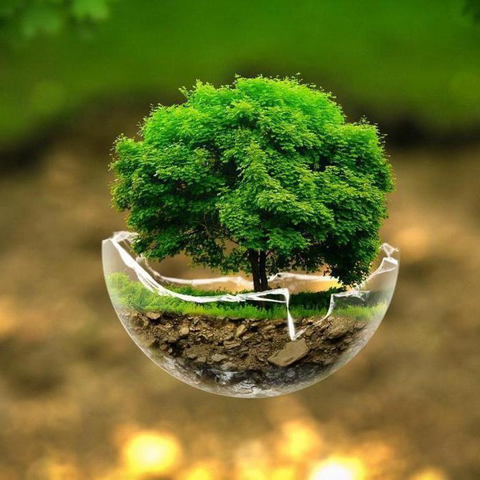 Живая и неживая природа – что это, определение, описание и фото  - «как и почему»