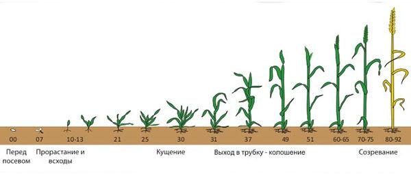 Что такое вегетация растений, как определить вегетационный период