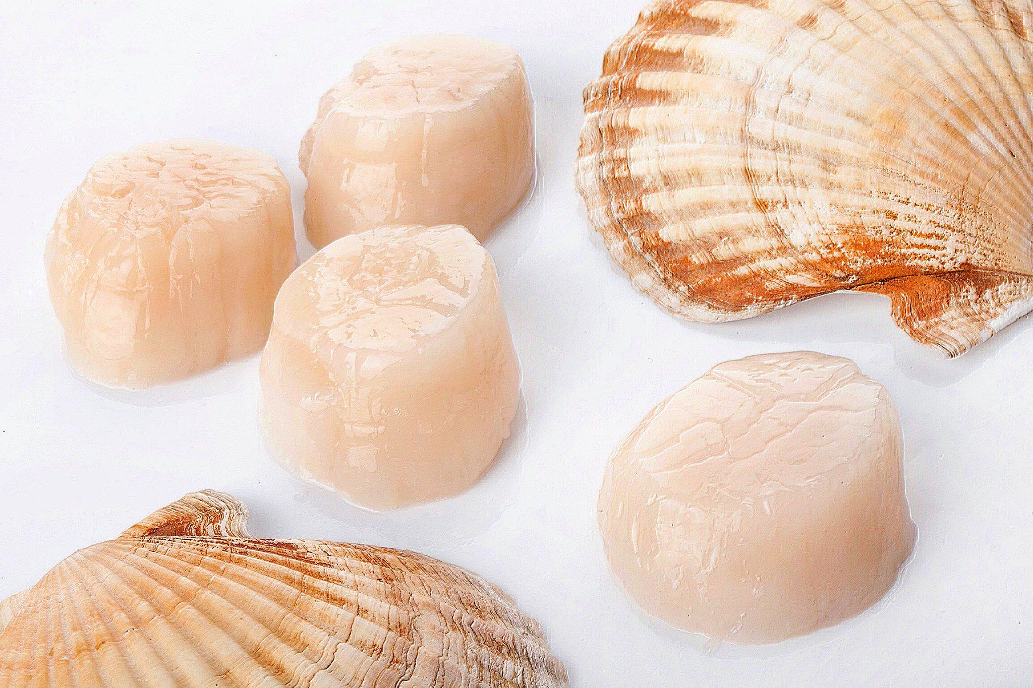 Морской гребешок – что это такое, рецепты приготовления на гриле и мангале, жареного, отварного и тушеного