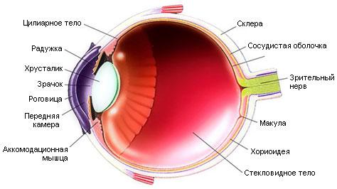 Роговица глаза: что это такое, её толщина, функции и слои