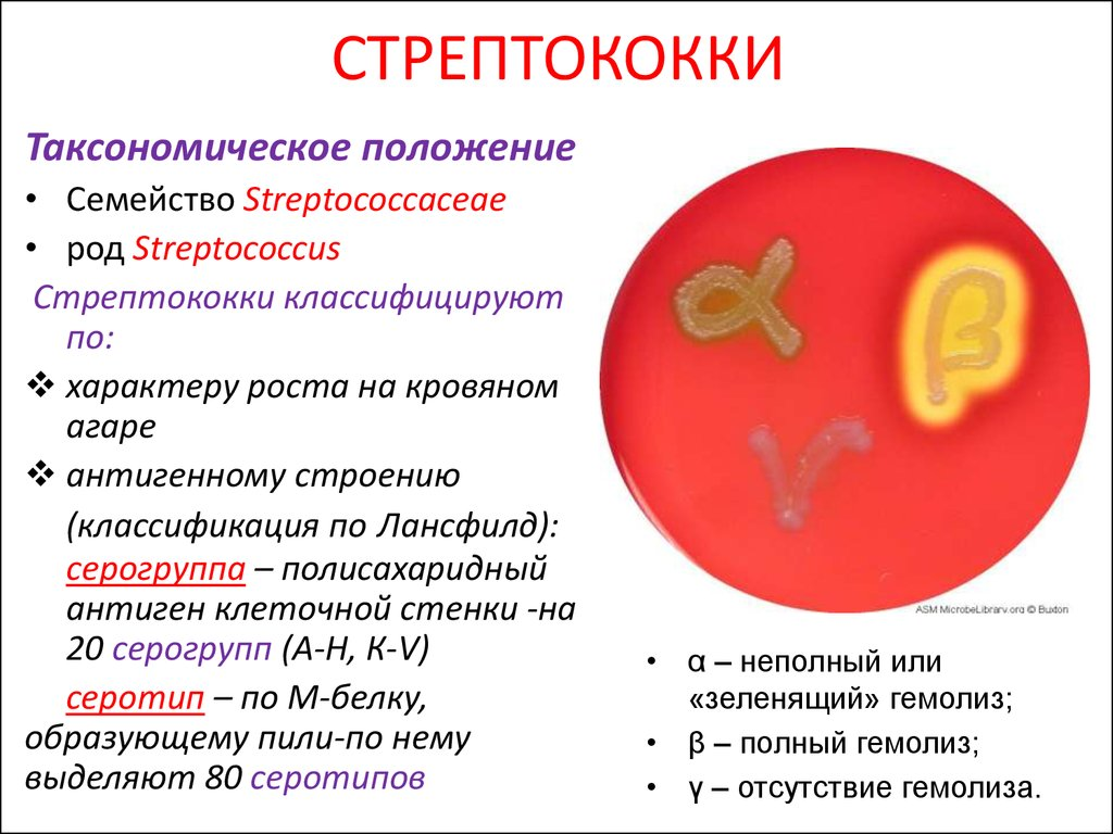Стрептококковая инфекция – лечение, причины, симптомы