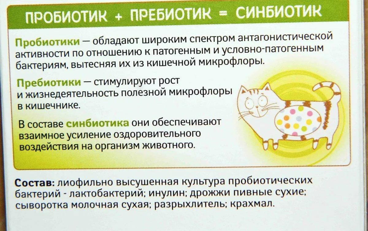 Пробиотики и пребиотики: в чем разница и что лучше? - satori