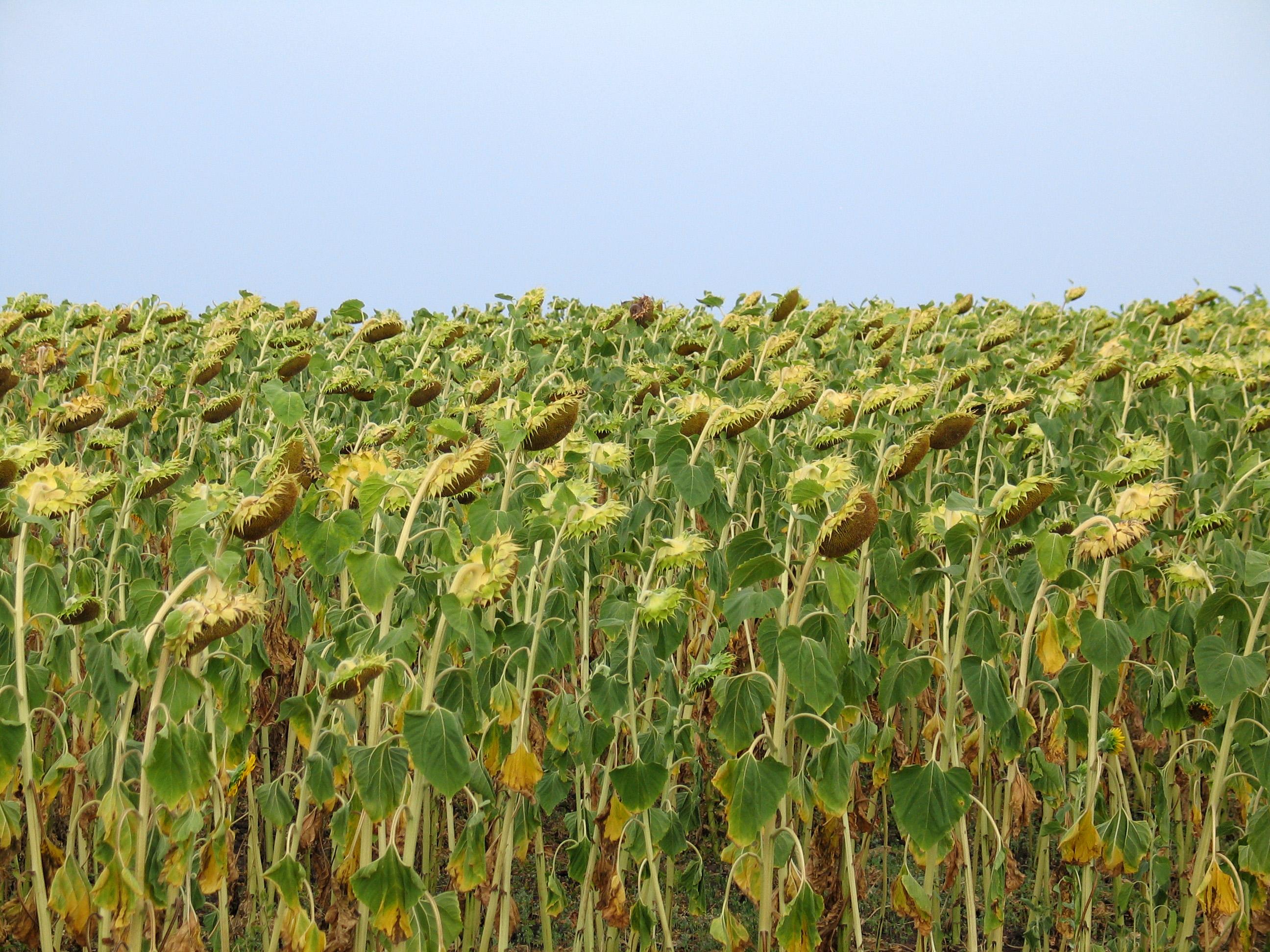 Виды растениеводства, основные отрасли — cельхозпортал