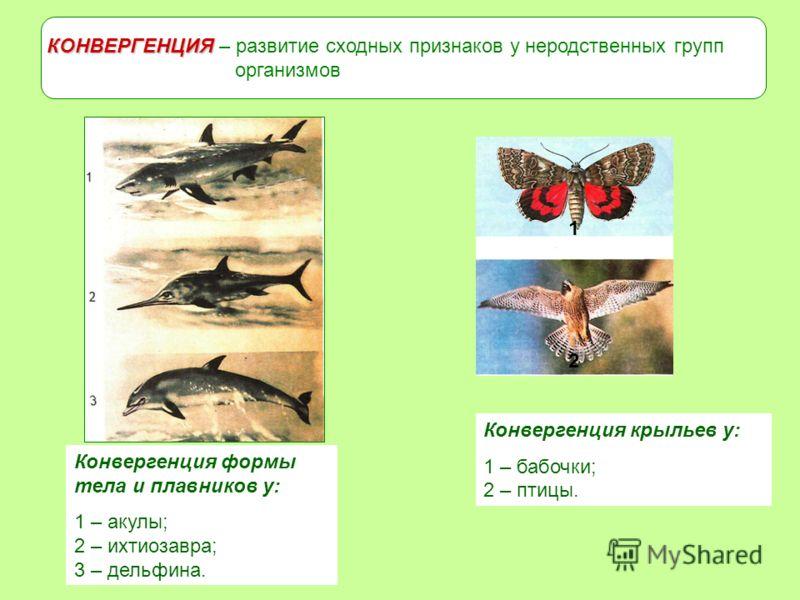 Дивергенция - это в биологии что такое? примеры дивергенции
