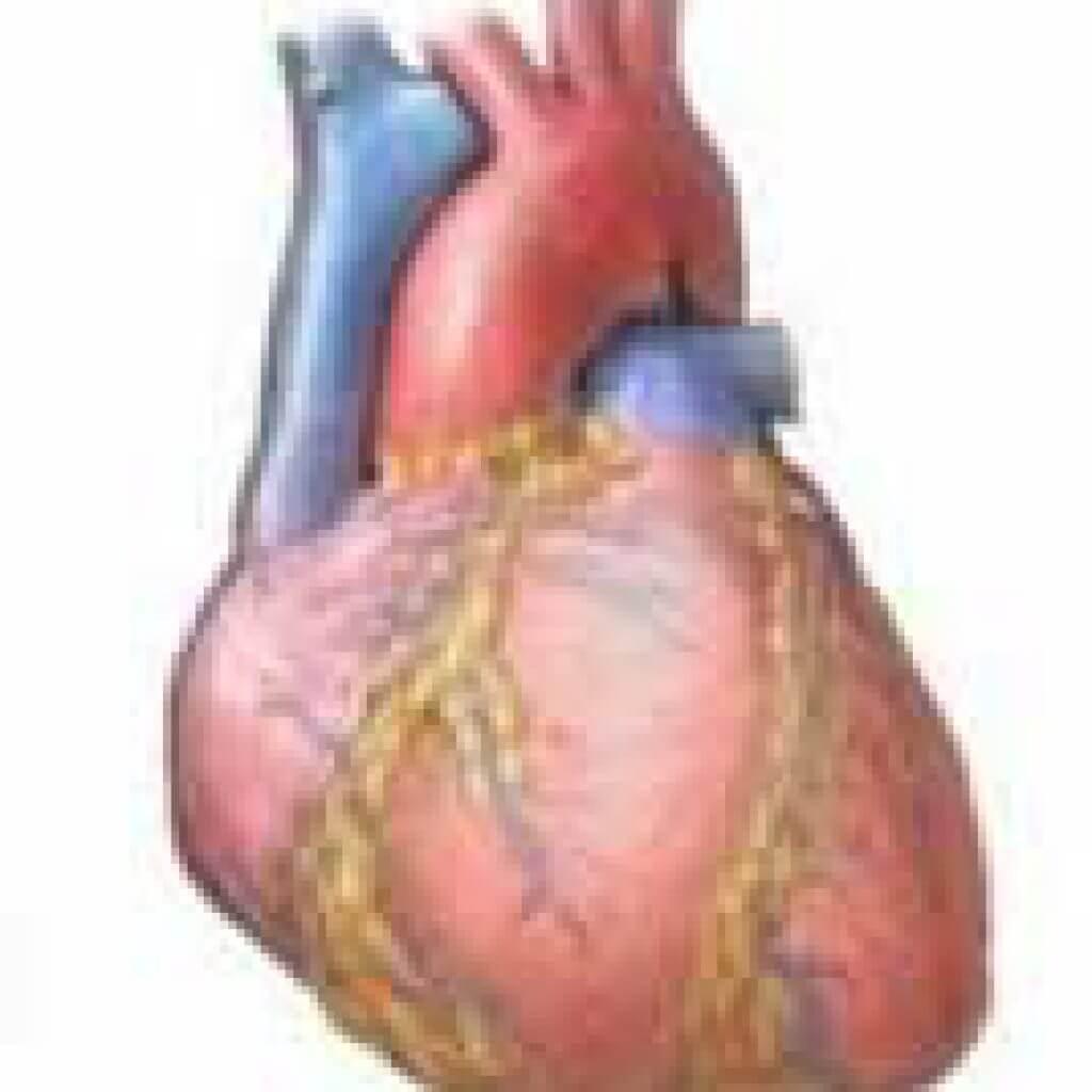 Алкогольная кардиомиопатия - что это такое, симптомы, лечение, смерть
