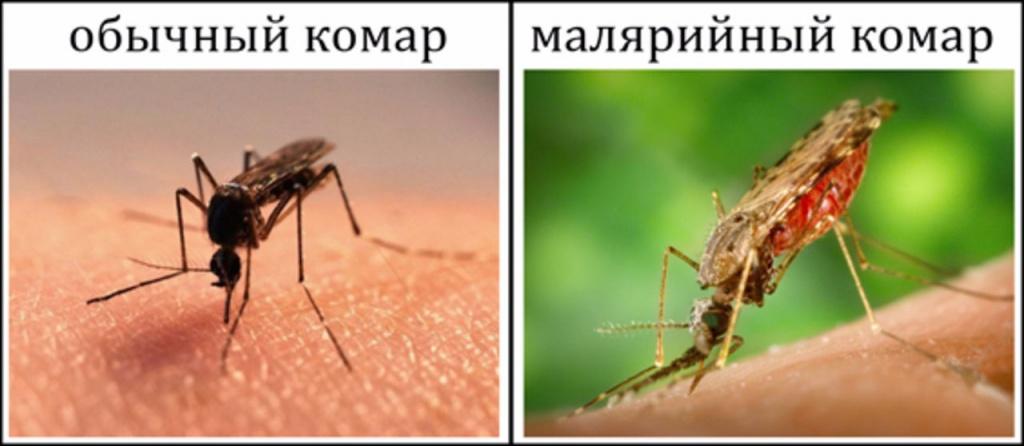 Малярия - лечение, симптомы, диагностика, возбудитель малярии