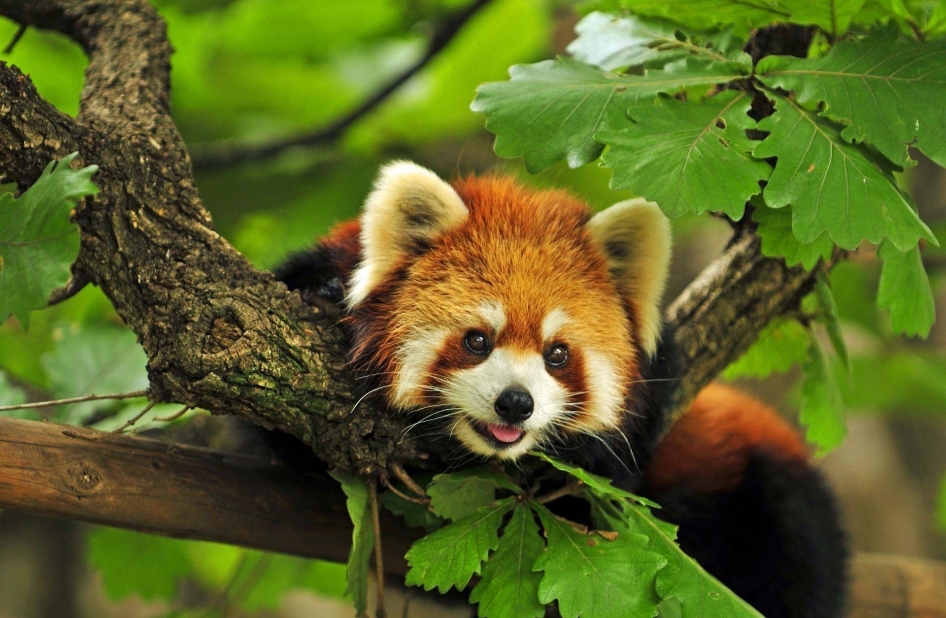 Значение слова «животное» в 10 онлайн словарях даль, ожегов, ефремова и др. - glosum.ru
