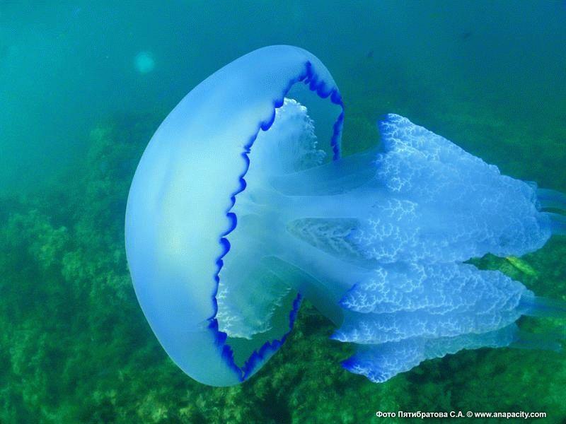 Медуза – последние новости