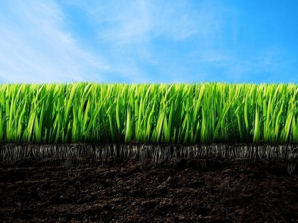 Все, что необходимо знать о плодородии почв