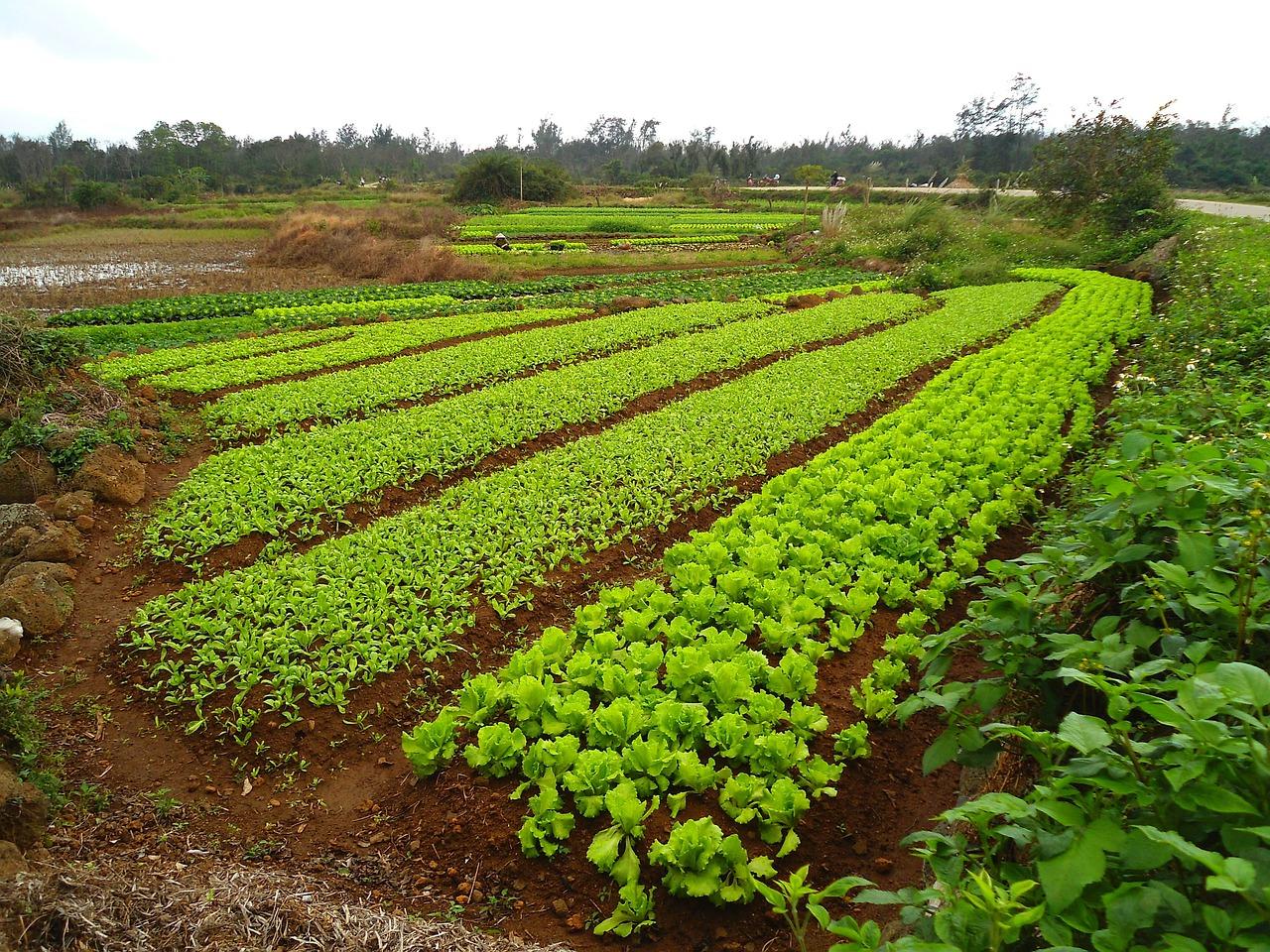 Что такое точное земледелие   сельскохозяйственная техника ао ммз