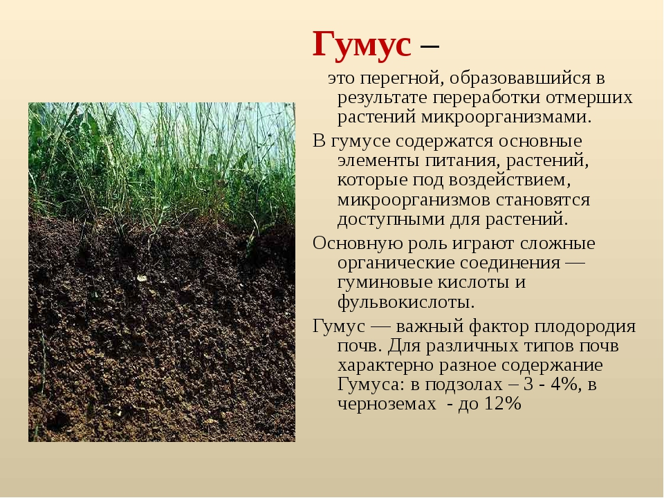 11 способов применения компоста на участке | дела огородные (огород.ru)