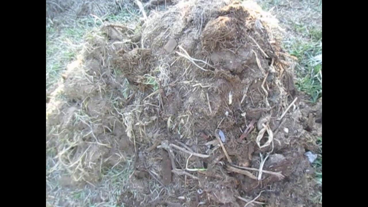 Как использовать компост как удобрение правильно? рекомендации на ydoo.info