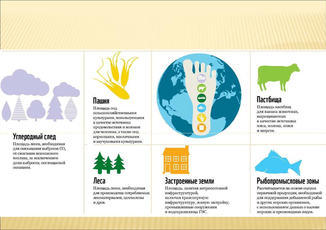 Что такое экологический след? расчет экологического следа.