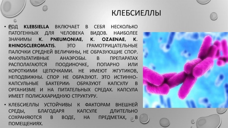 Клебсиелла: что это такое, причины, симптомы и лечение
