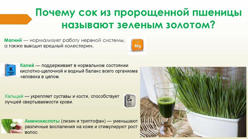 Витграсс в домашних условиях - как приготовить и употреблять
