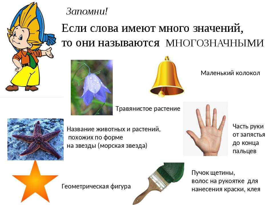 Однозначные и многозначные слова: стандартные примеры, как их определить и зачем они нужны | tvercult.ru