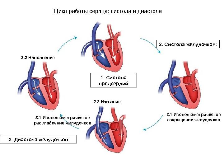 Что значит систола и диастола