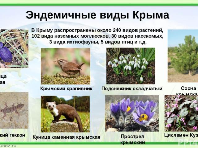 Что такое эндемики – определение и значение термина, виды, примеры