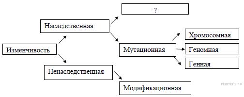 Мутационная и модификационная изменчивость. генные, хромосомные, геномные мутации
