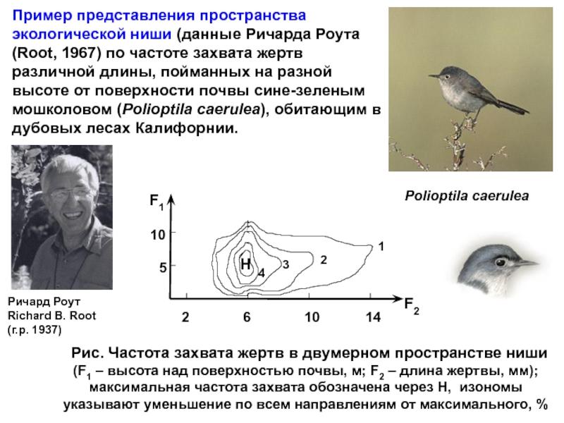 Что такое экологическая ниша - определение, типы и примеры — природа мира