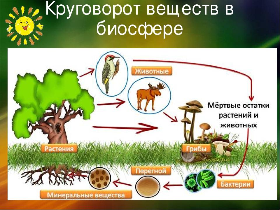 Круговорот веществ в биосфере: виды, функции и значение