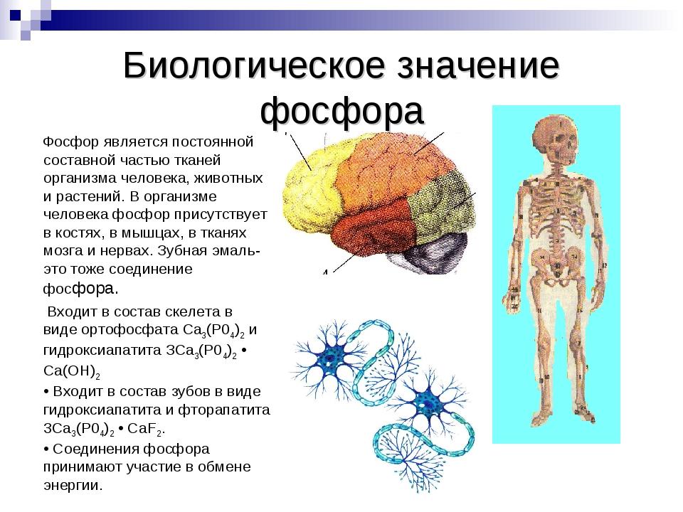 Фосфор (мифология) — википедия. что такое фосфор (мифология)