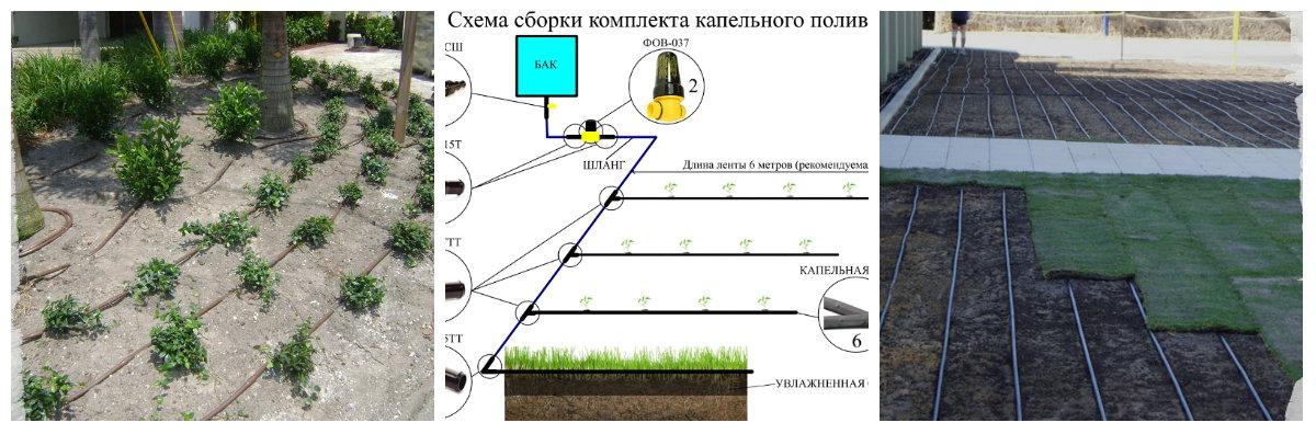 Капельный полив - как работает автоматический полив, его виды и устройство