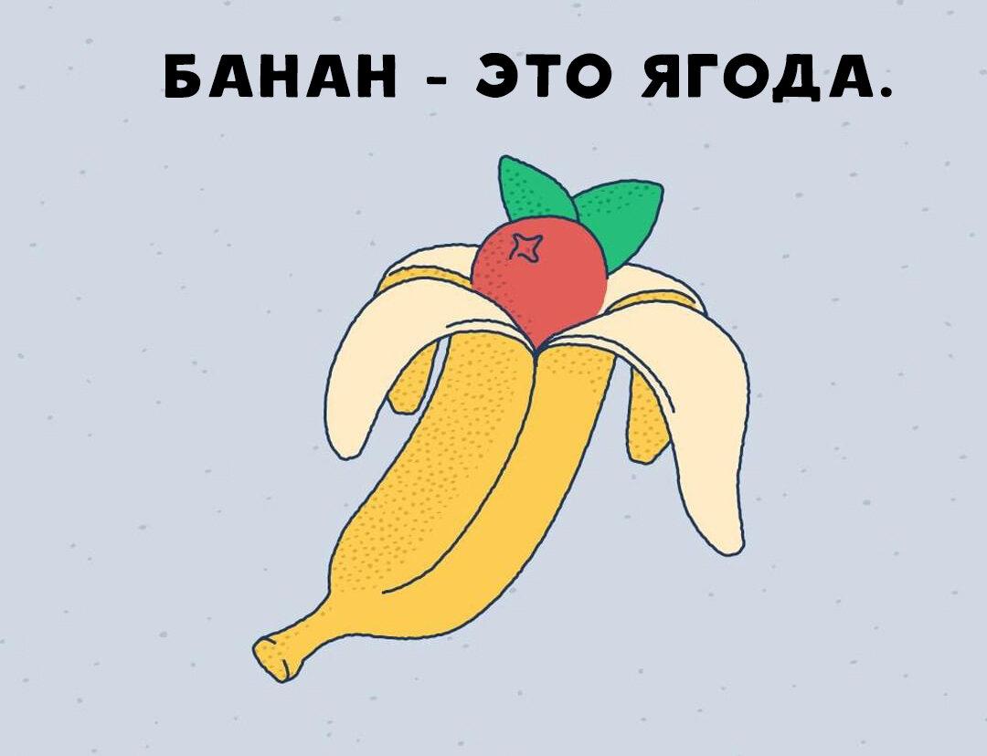 Банан – описание, виды и сорта, выращивание, польза, фото.