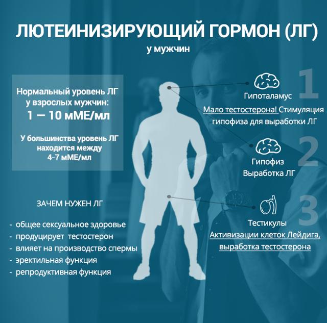 Альдостерон: норма гормона, действие, функции, антагонисты