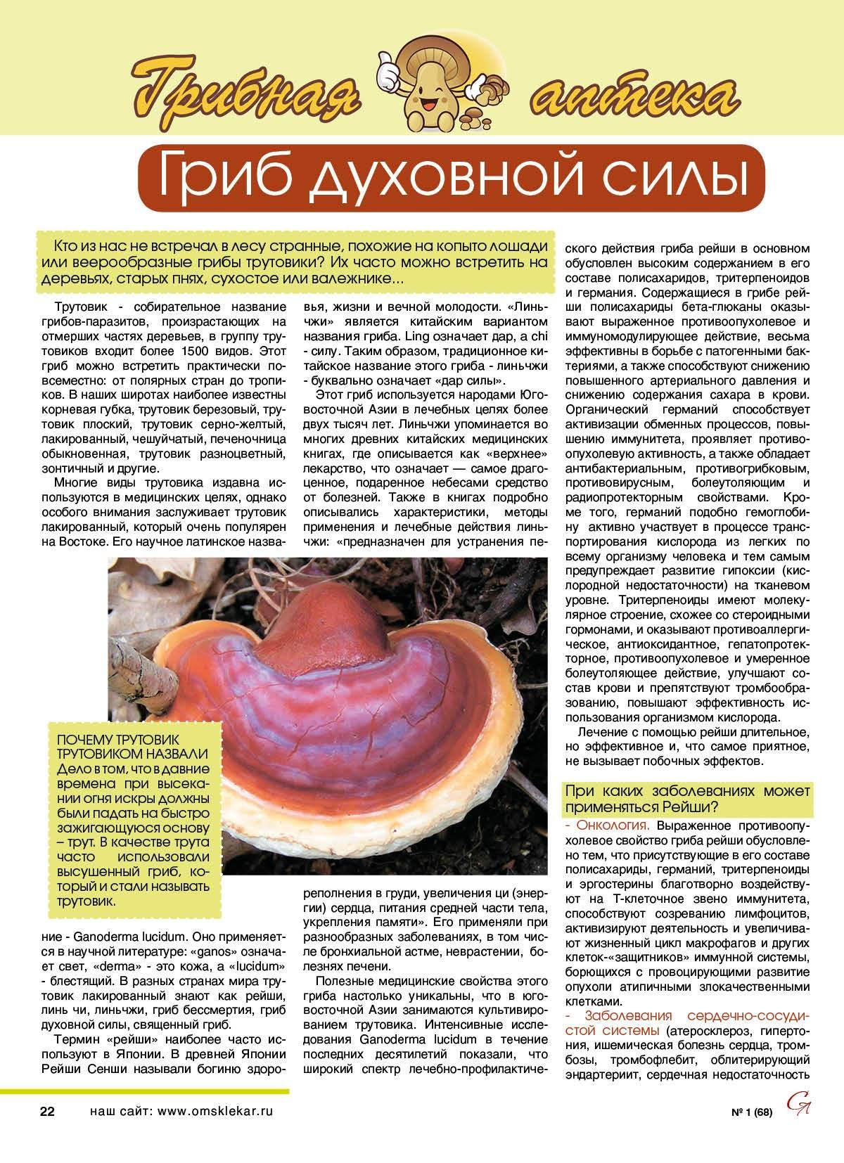 Лечебные свойства гриба рейши и его противопоказания (+17 фото)