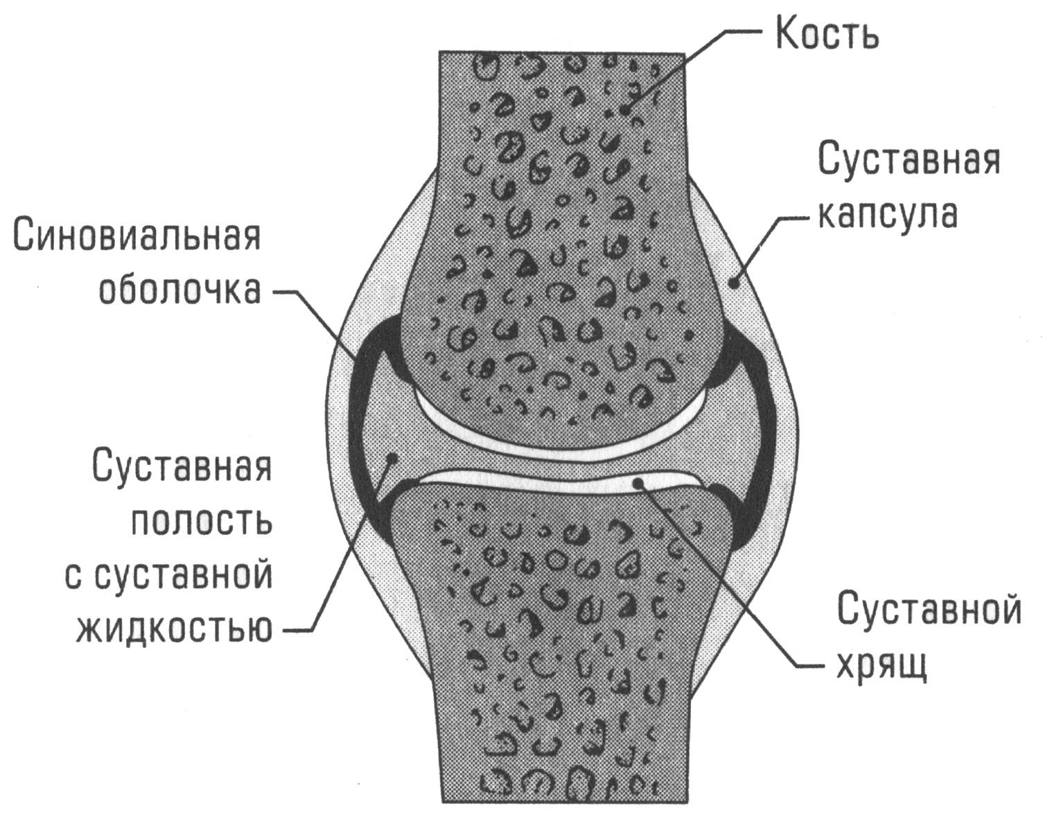 Жидкость в коленном суставе. причины скопления