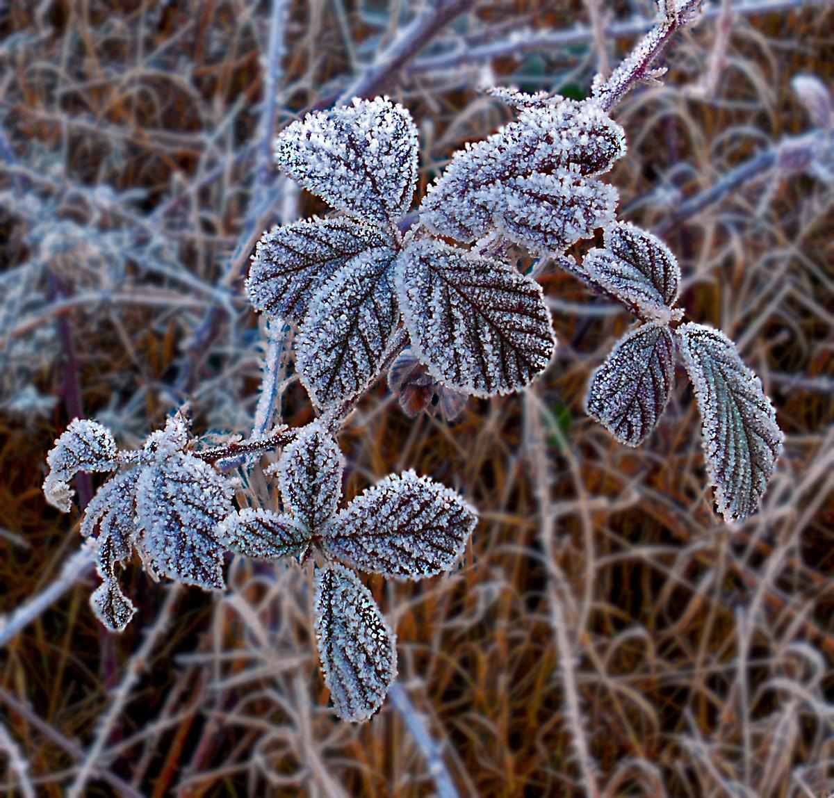 Как отличить изморозь от измороси? в чем разница между изморозью и изморосью?