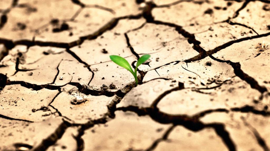 Борьба с опустыниванием земель | статья в журнале «молодой ученый»